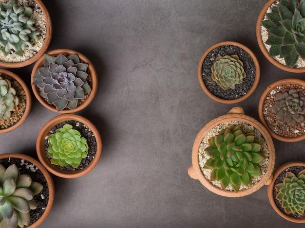 회색 콘크리트 배경에 냄비에 다육 식물. 텍스트를위한 공간을 복사합니다.