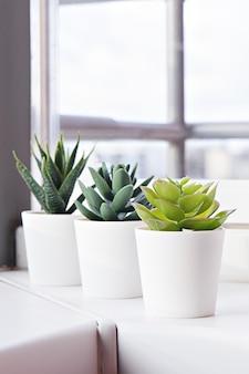 窓辺の鉢植えの多肉植物。白い鉢に植えられたミニサボテン。家の装飾のアイデア