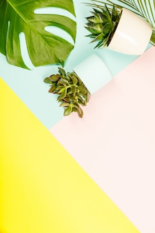 Succulents and monstera leaves plants on pastel colors background