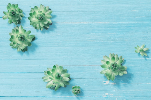 Succulents on old blue wooden background