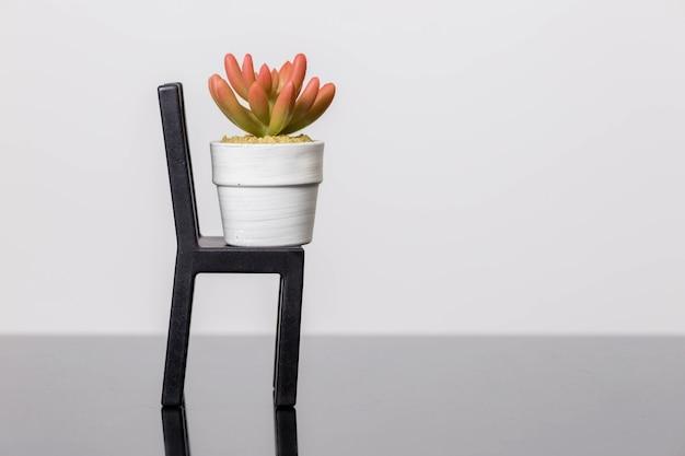 의자에 다육 식물은 흰 벽에 검은 유리 표면에 선다