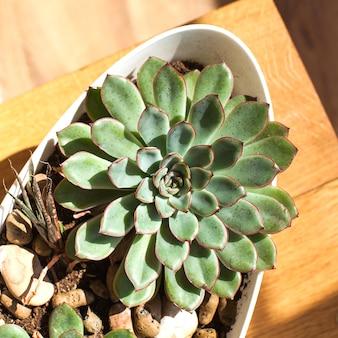 木製の背景に多肉植物。家の植物の概念、緑の植物の室内装飾。