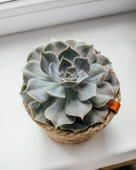 창가의 다육식물