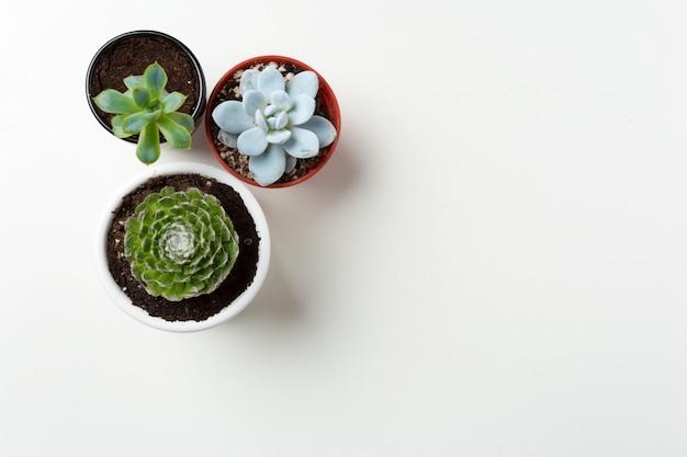 냄비 배경에서 다육 식물
