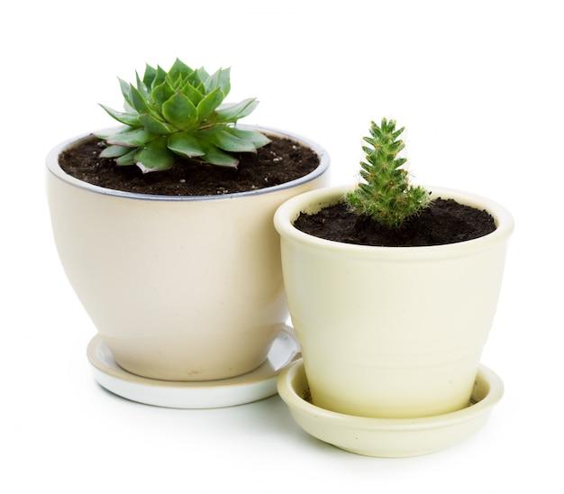 냄비에 다육 식물