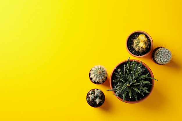 Succulents plants on yellow background, top view and space for text