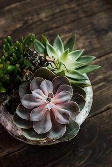Succulents in pot over old dark wooden background