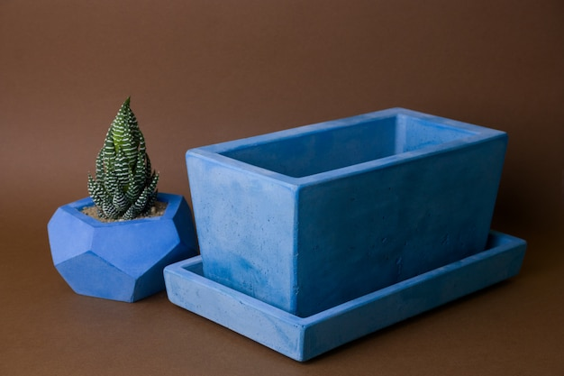 Succulents potted in painted concrete pot on brown background