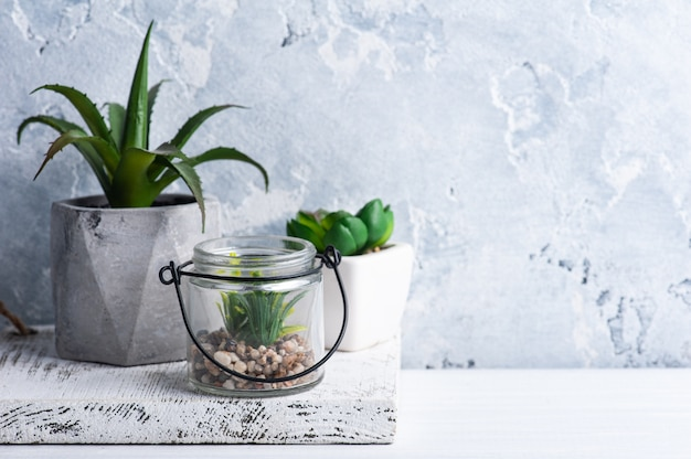 Succulents in various concrete and glass pots on white shelf.