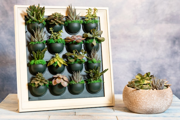 Succulents on the wall plate with terrarium in the ceramic pot