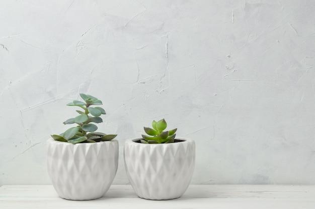 Succulents in white pots.