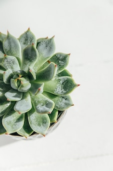 Succulents on a white