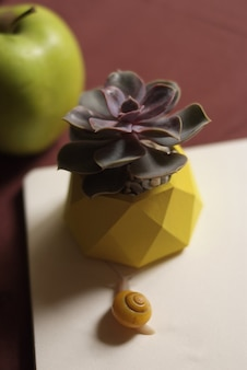 Succulents in yellow concrete pot on table with little snail near apple and notebook.