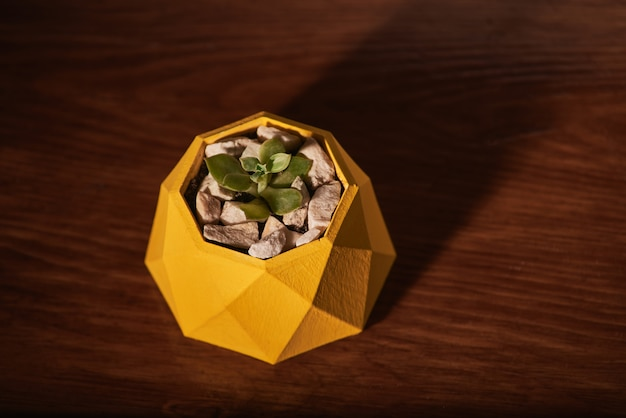 Succulents in yellow concrete pot on wooden background. clean photo