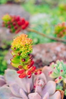 地面のかわいいsuckent植物。