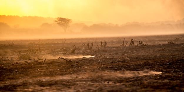 Sugar cane fire plantation
