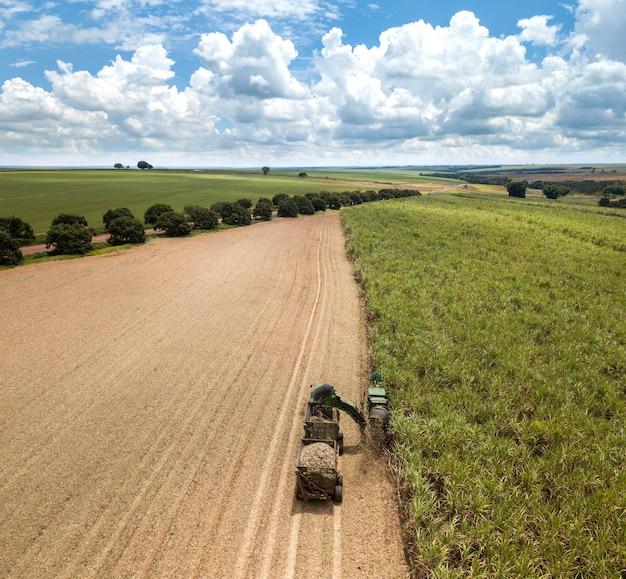 サトウキビ-カラフルな空の表面にあるサトウキビ畑のプランテーションで作業する収穫機。