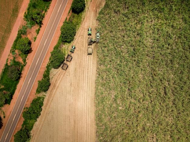 Sugar cane - harvesting machine working on a sugar cane field plantation.