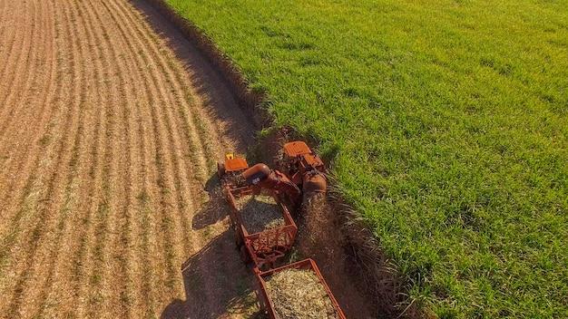 Sugar cane hasvest plantation aerial