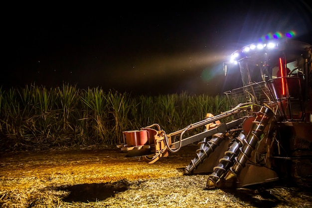 Sugar cane hasvest plantation night