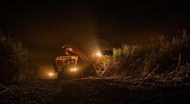 Sugar cane hasvest plantation night