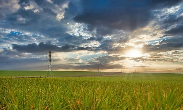 Закат плантации сахарного тростника