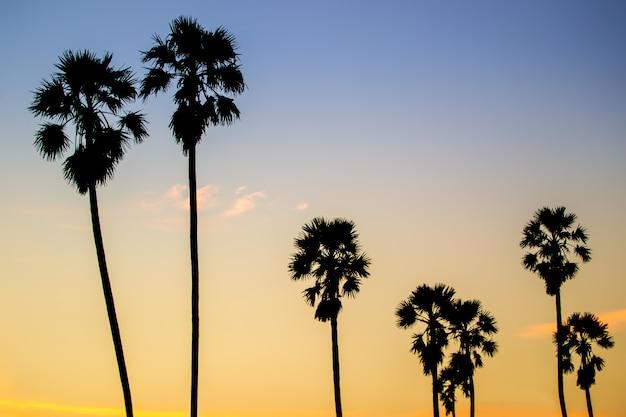 美しい夕焼け空の間に田舎の砂糖sugar子の木の風景。