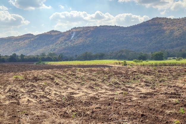 山と青い空のサトウキビ畑
