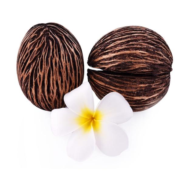 자살 나무와 plumeria 또는 frangipani 흰색 배경에 고립