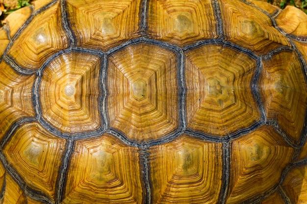 Sulcata亀の甲羅の背景を閉じる