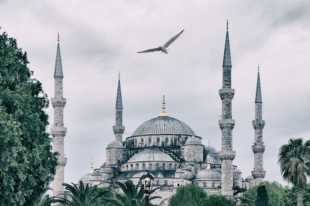 Sultan ahmed mosque or blue mosque with seagull in sky