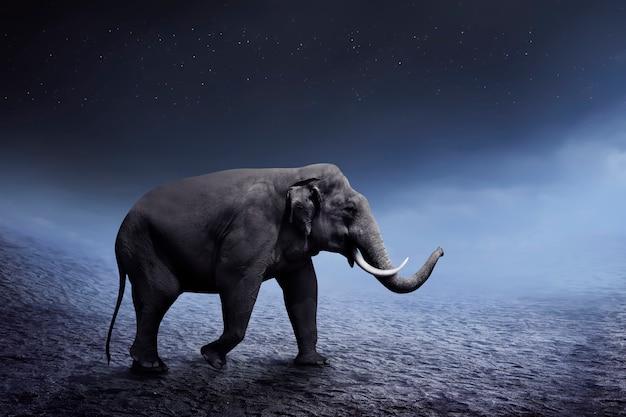 Sumatran elephant walk on the desert