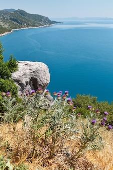 Вид сверху на летнюю береговую линию адриатического моря с деревом, чертополохом и камнем впереди (хорватия)
