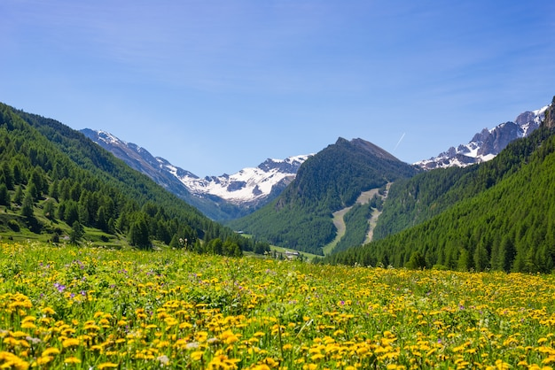 Summer in the alps. blooming alpine meadow and lush green woodland