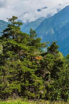夏アルプスの山の美しい平和な風景、スイス