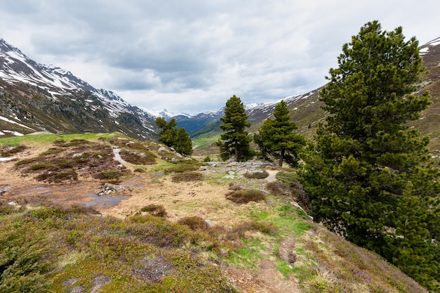 Летний горный пейзаж альп с лугом и сосной (перевал флюэла, швейцария)