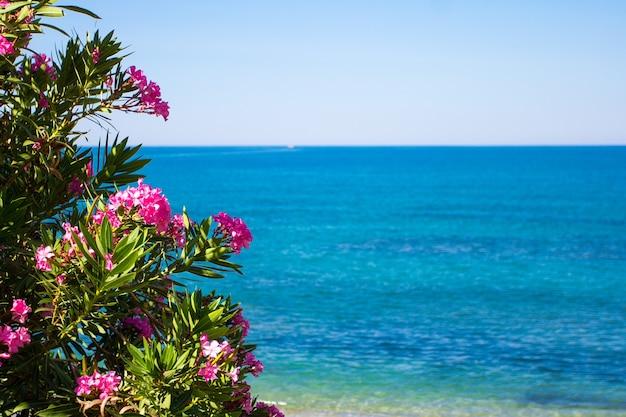 여름과 휴가 배경 - 푸른 바다와 하늘 위에 꽃