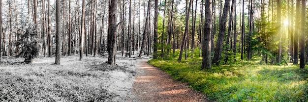 Лето и зима сочетаются в одной фотографии смены зимнего и летнего сезонов снега и травы в ...
