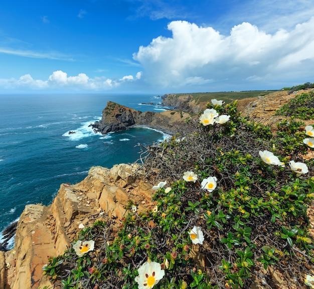 正面に白い花の茂みがある夏の大西洋の岩の多い海岸線の風景(アリファナビーチ、アルジェズル、アルガルヴェ、ポルトガルの近く)。