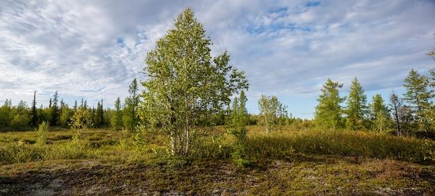 Летний осенний лесной пейзаж с зелеными деревьями и голубым небом