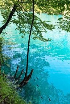 Летний лазурный, прозрачный вид на озеро и мелкие рыбки у берега (национальный парк плитвицкие озера, хорватия)