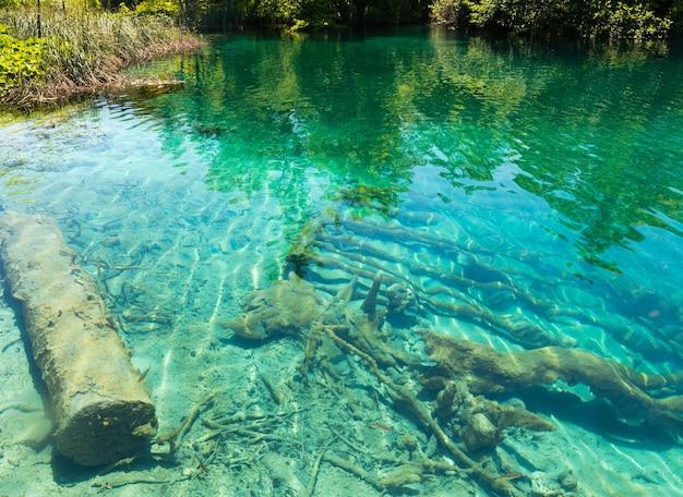 夏の紺碧の澄んだ透明な湖の景色と底の乾いた木の幹(クロアチア、プリトヴィツェ湖群国立公園)