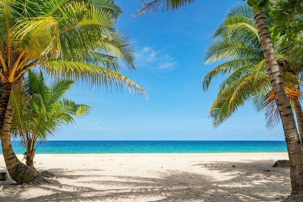 Summer background of coconut palm trees on white sandy beach landscape nature view romantic ocean bay with blue water and clear blue sky over sea at phuket island thailand.