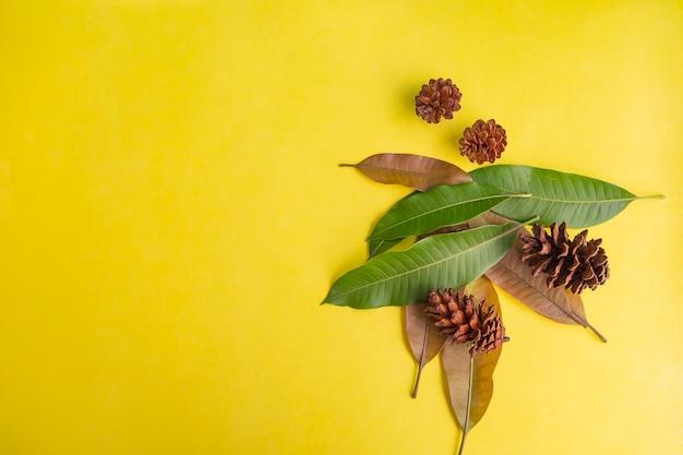 여름 배경 개념입니다. 망고 잎과 전나무 나무 과일 꽃 노란 종이 배경에 고립.