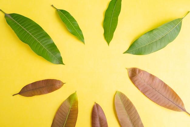 여름 배경 개념입니다. 망고 잎 노란 종이 배경에 고립입니다.