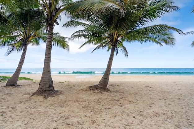 하얀 모래 해변에 코코넛 야자수의 여름 배경 풍경 자연 보기 푸 켓 섬 태국에서 바다 위로 푸른 물과 맑고 푸른 하늘 로맨틱 오션 베이.