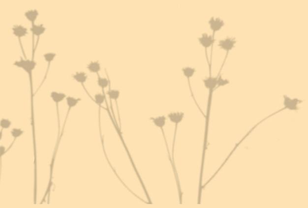 植物の影の夏の背景。ベージュの壁にエキゾチックな植物の影。モックアップ。
