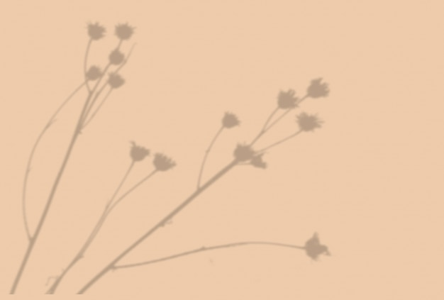 식물 그림자의 여름 배경입니다. 베이지색 벽에 이국적인 식물의 그림자. 모형.