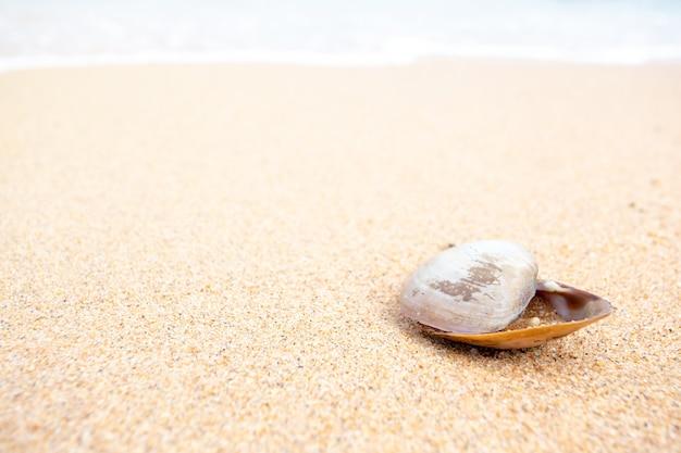 Летний фон, раковины помещаются на песок, скопируйте пространство