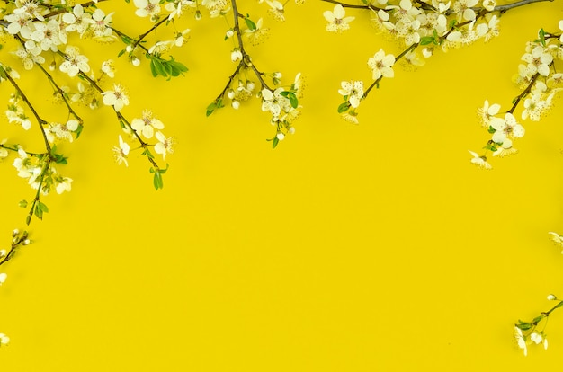 Summer background with border arrangement white blossom tree branches on sunny yellow background.